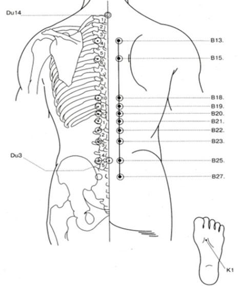по осевой линии спины