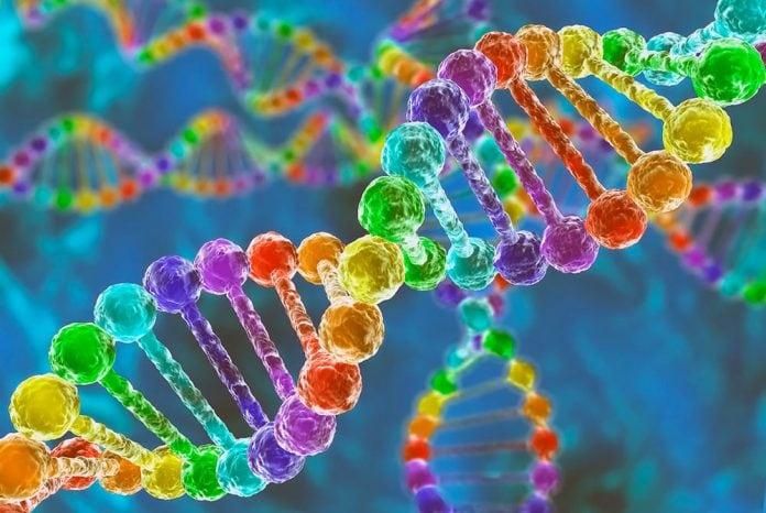Влияние образа жизни на гены человека