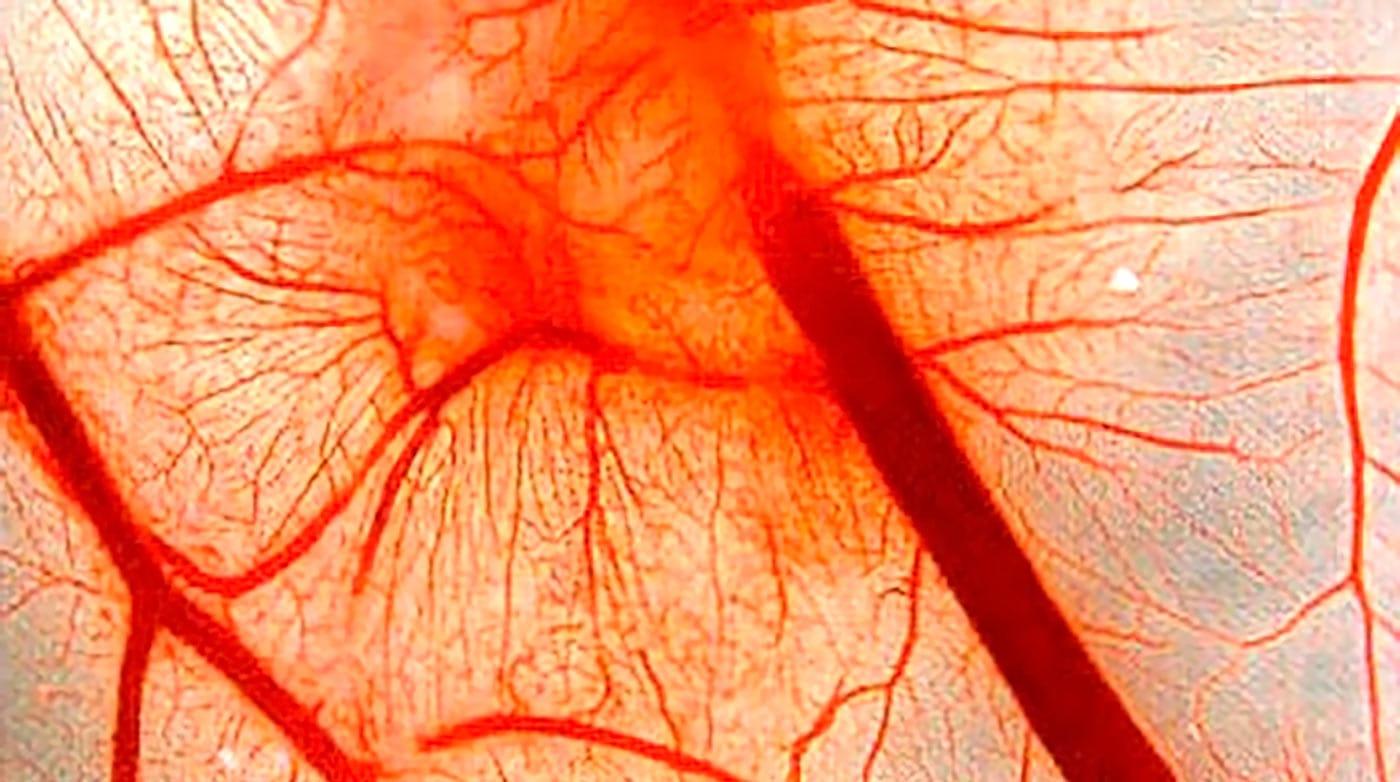 На проницаемость капилляров влияет витамин