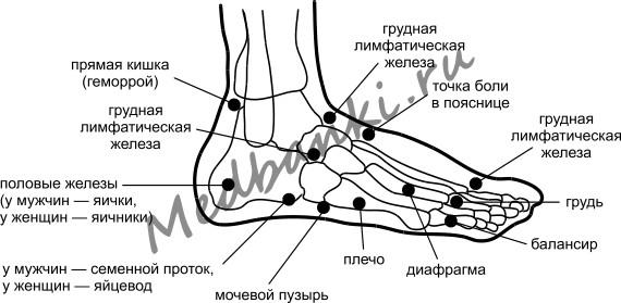 Рефлексогенные зоны на стопе, инструкция к присоскам HACI